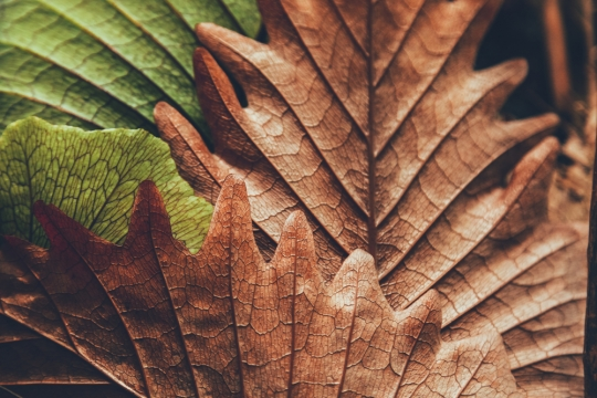 Autumn In France, Atestados In Portugal, And Avoiding Double Taxation In Germany