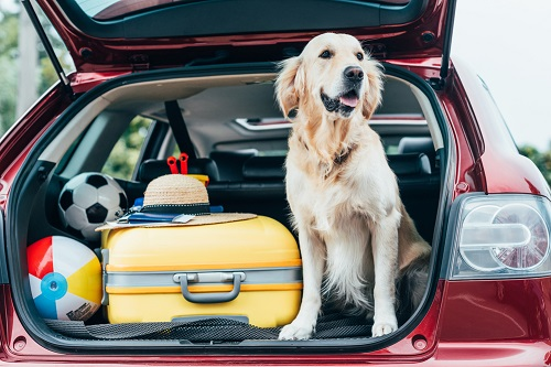 Moving Abroad With Pets: How Have The Rules Changed Due To Covid? - Expat  Focus